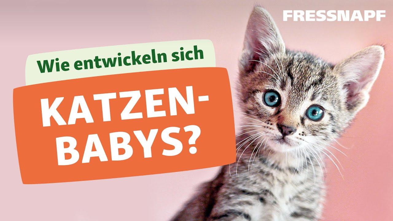 Katzenbabys von mir zeig bilder Katzenmarkt: Katzen