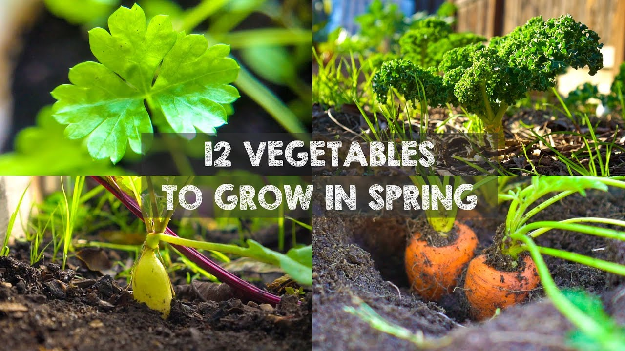 12 Vegetables You Should Grow In Spring