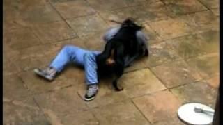 Rottweiler fazendo guarda(Rottweiler training) thumbnail