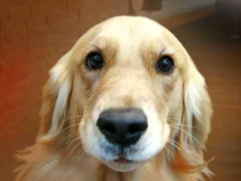 Poker Face Perro Youtube