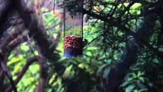 6 Min Of Busy Life Of One Garden Birdfeeder