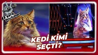 O Ses Türkiye'de Kedi Sürprizi! | O Ses Türkiye 30. Bölüm