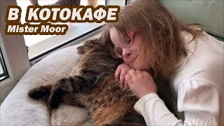 VLOG CAFÉS - Café cat Cafés video