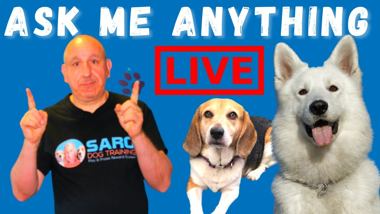 Your puppy or dog training problems, SOLVED! Ask Me Anything.