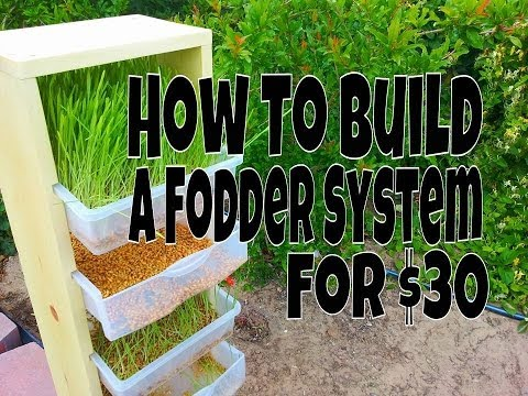 How To Build A Fodder System For Chickens, Rabbits Or Other