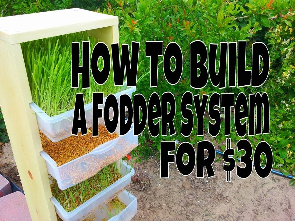 How To Build A Fodder System For Chickens Rabbits Or