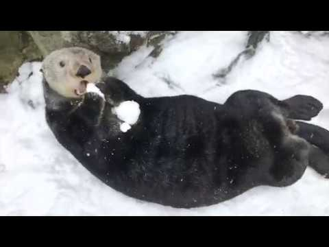Steve Knoll - These Guys Are Actually Enjoying  the Snowfall