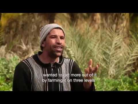 Pioneering Multi-level Farming in Tunisia
