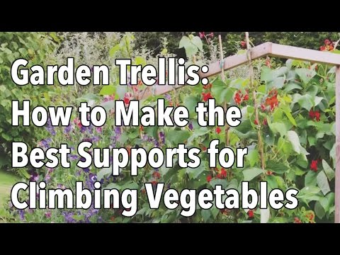 Garden Trellis - How to Make the Best Supports for Climbing Vegetables