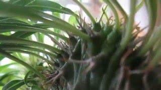 Zelenoe rastenie 0413ZZ