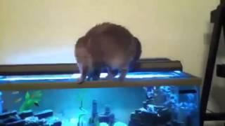 ▶ Кошки умеют плавать Kat   YouTube 360p