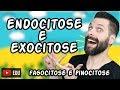 Endocitose (Fagocitose e Pinocitose) e Exocitose - Transporte por Vesículas | Biologia
