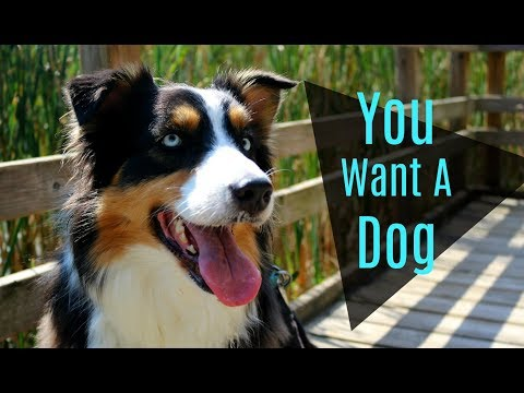 Things You Need to Know Before Getting a Dog |Life With Aspen|