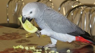 Правильной питание попугаев.  ДОЛЖЕН ЗНАТЬ КАЖДЫЙ владелец попугая!
