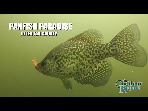 How to catch Panfish in Otter Tail County