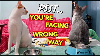 Buying NEW BOWLS for my boys! CAT FOOD MUKBANG 😂ASMR!
