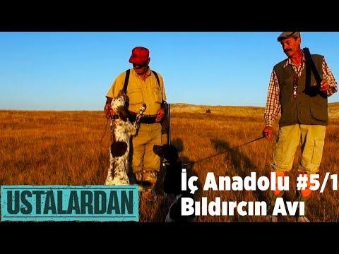 USTALARDAN 5 BÖLÜM İÇ ANADOLU BILDIRCIN AVI PART 01