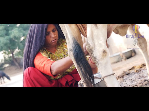 Gujarati Documentary - Sarhad Dairy