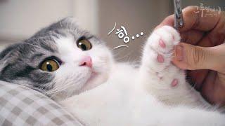표정이 너무 귀여운 고양이들 발톱깎기