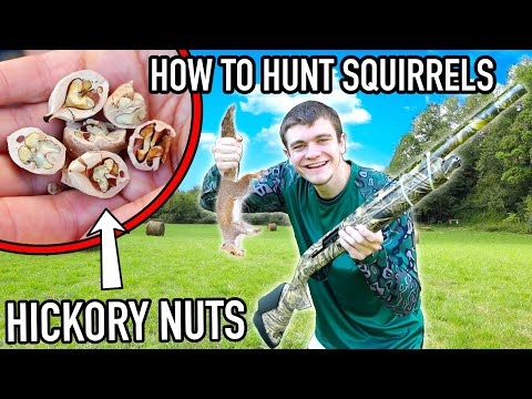 How to HUNT SQUIRRELS! (Full Guide) – Kendall Gray