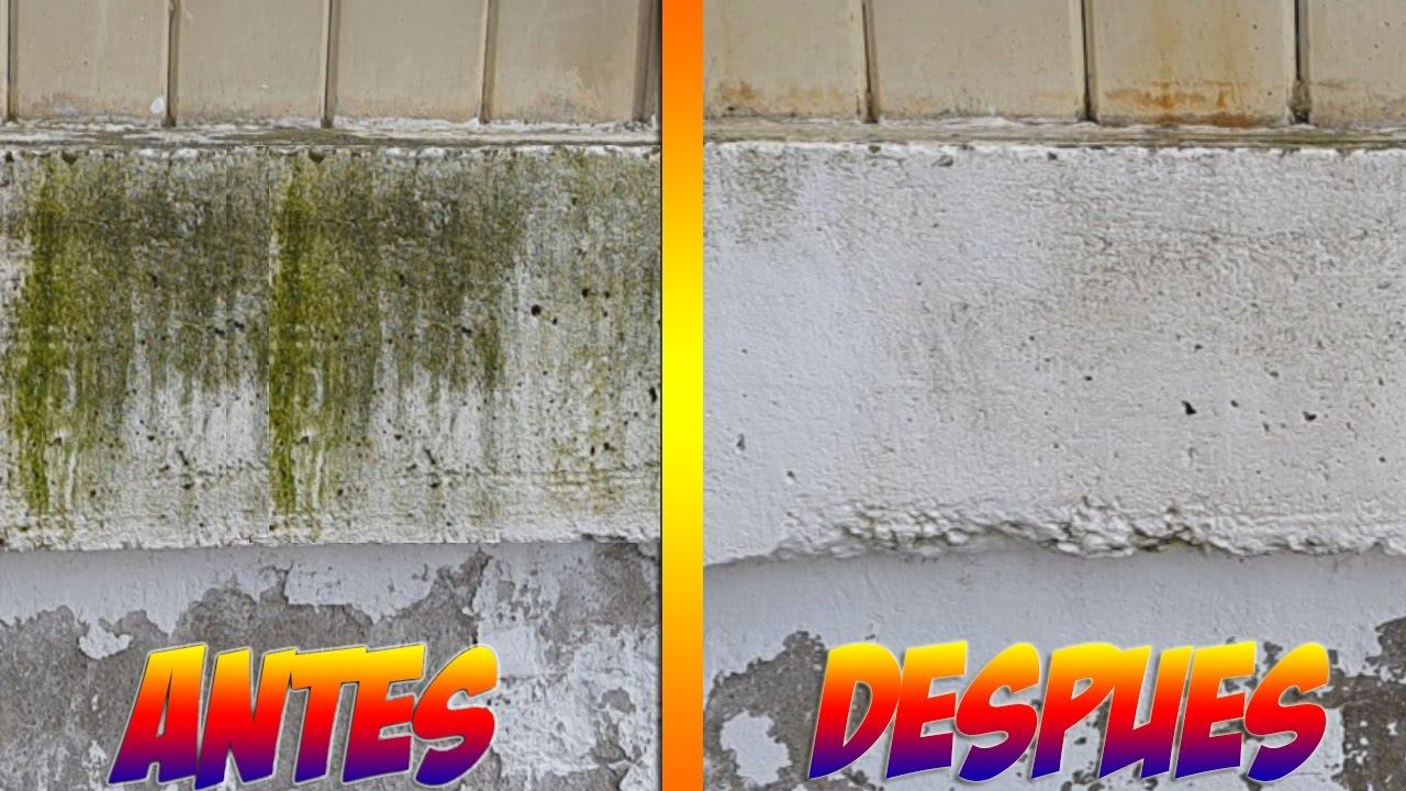Como eliminar el moho de suelos o paredes f cilmente - Como eliminar el moho ...