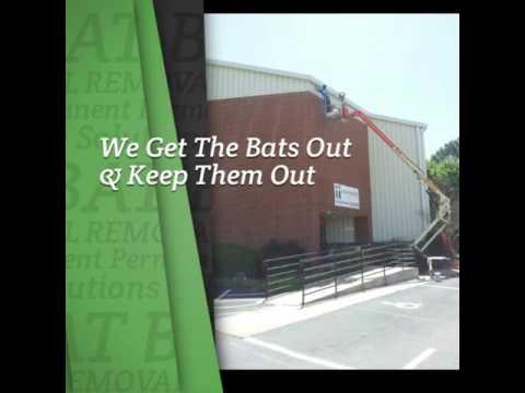 Pennsylvania Bat Removal
