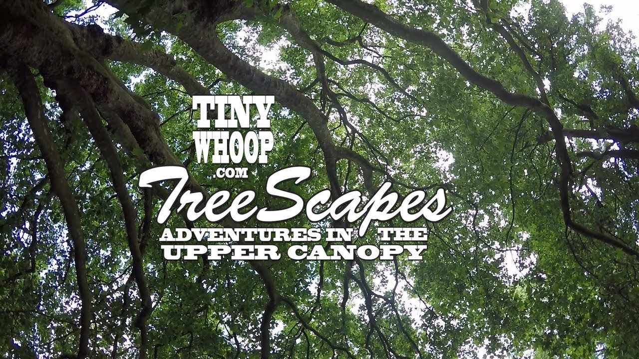 TreeScapes – Adventures in the Upper Canopy – Pa…