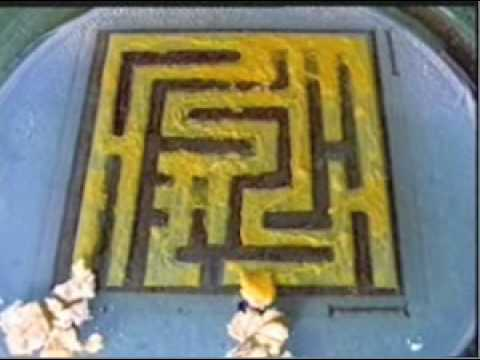 Slime Mold Solving A Maze In The Lab YouTube - Slime mold map of us