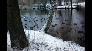 müslüm gürses   - yesil ördek