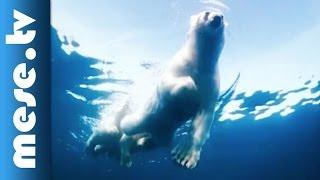 Varázslatos sarkvidék 3D - gyerekfilm, mozifilm előzetes gyerekeknek (x)