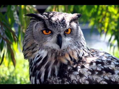 What Does Owls Dreams Mean Youtube