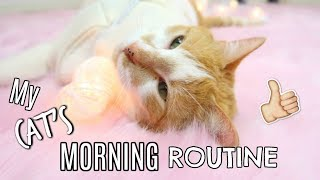 Cute Cat Morning Routine   Kitty Cat Milo Ft. Annie Rose 2017