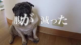 大五郎のごはん 今日はマドッシュカフェの看板犬大ちゃんのごはんを作る...