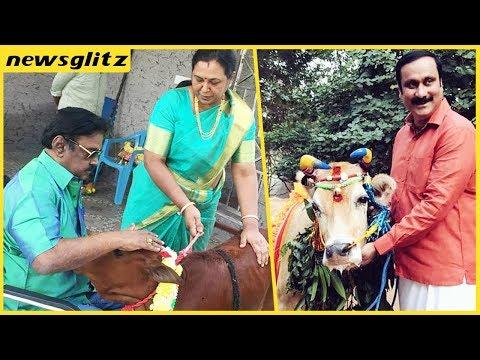 Political Pongal  2018 - Tamilnadu politician celebrating pongal festival