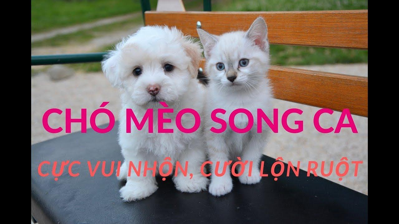CHÓ MÈO HÁT SONG CA PHẦN 2 nhạc thiếu nhi remix
