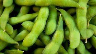 Рецепт зеленые бобы на сковороде Закуска из бобов