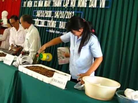 Hội thi trồng rau mầm