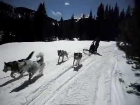 Good Times Dog Sledding