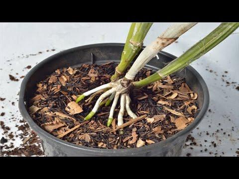 Clique e veja o vídeo Curso Cultivo de Orquídeas - Substrato para Orquídeas