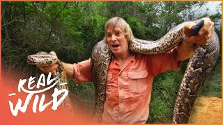 Austin Steven's Faces A Monster Python | Austin Stevens Adventures  | Real Wild
