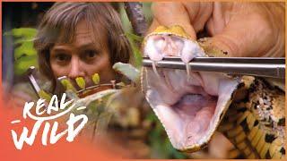 Austin Stevens Adventures - Monster Python [Documentary Series]   Real Wild