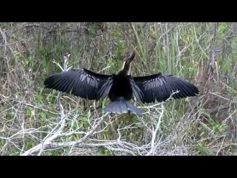 Shark Valley - Everglades - Florida - in Full Hd