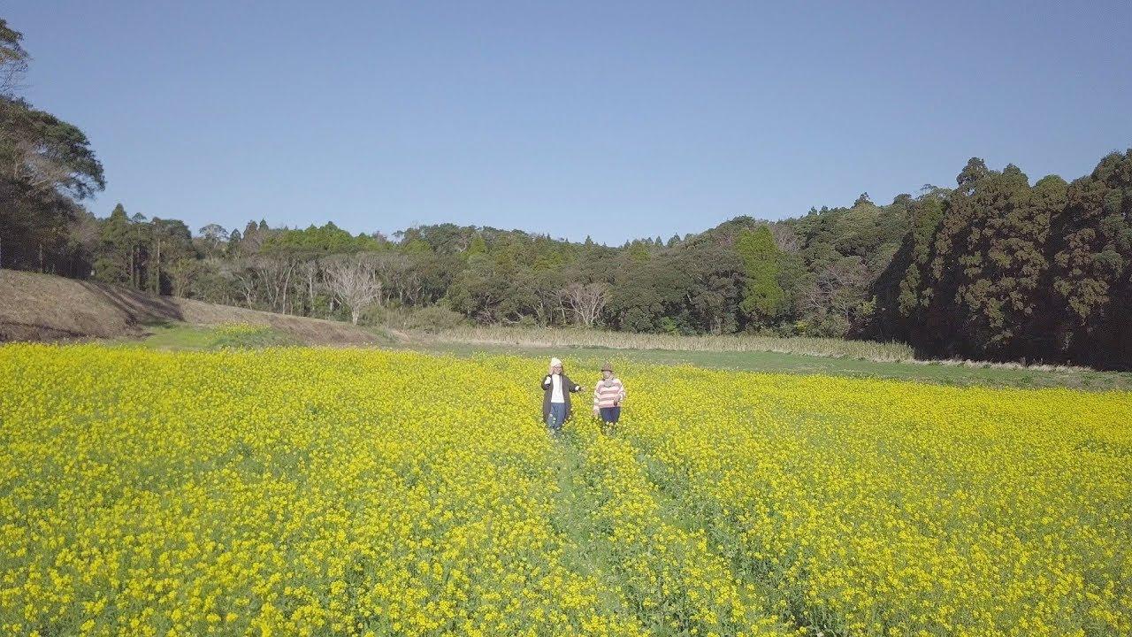 Timeless Japan, Tanegashima