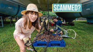 Scammed on Anchor Chain, What You NEED To Know