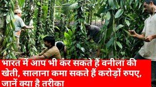 भारत में आप भी कर सकते हैं वनीला की खेती, सालाना कमा सकते हैं करोड़ों रुपए, जानें क्या है तरीका