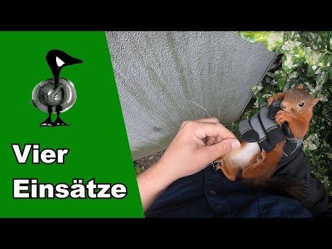 Vier Tierrettungseinsätze - Tiernotruf #215