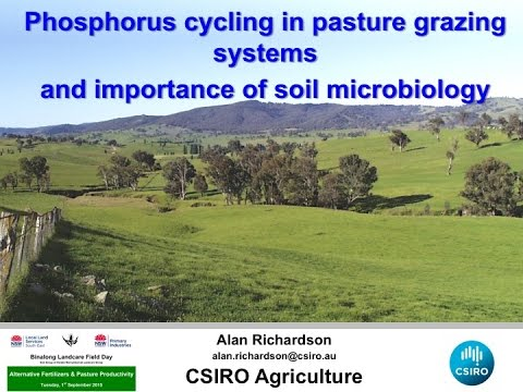 Phosphorus cycling in pasture grazing systems and importance of soil microbiology.