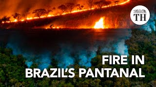 The world's largest tropical wetland is burning