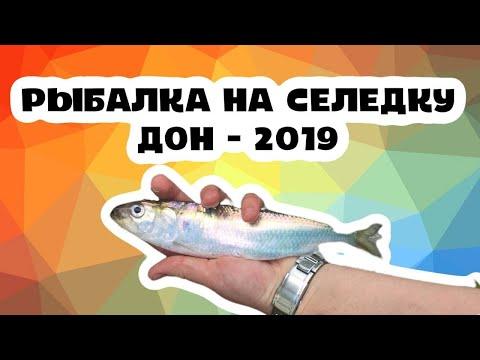 Рыбалка на селёдку на Дону . Май 2019