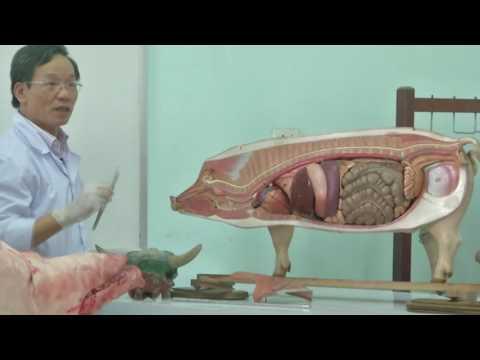 Bài giảng điện tử - Giải Phẫu Động Vật Hệ : Tiêu Hóa